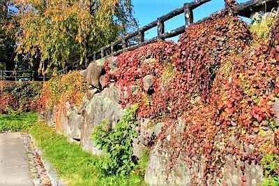 弘前公園を秋さんぽ_2020.10.28撮影_d0131668_12034762.jpg