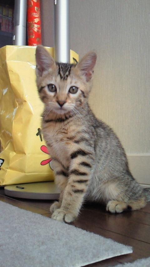 ネコ・天ちゃんの4ヶ月命日