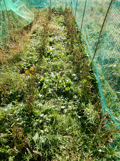 自然農の畑 10月中旬~下旬_d0366590_06052685.jpg