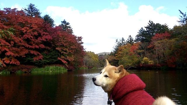 秋はしんみり_b0274270_13542444.jpg