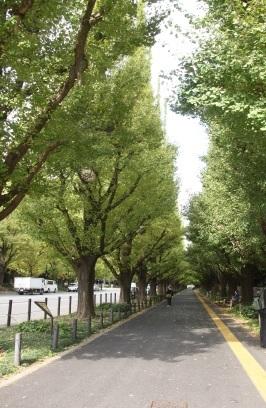 外苑銀杏並木 ~青山~_b0207284_17074110.jpg