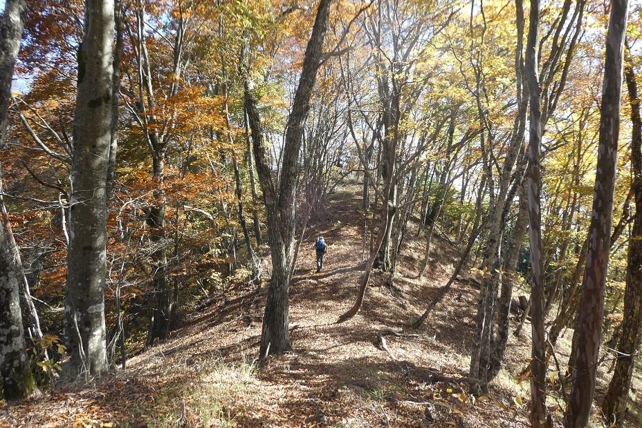 10/29 三頭山 / 黄葉と巨樹に会ってきた ①_d0288144_18454846.jpg