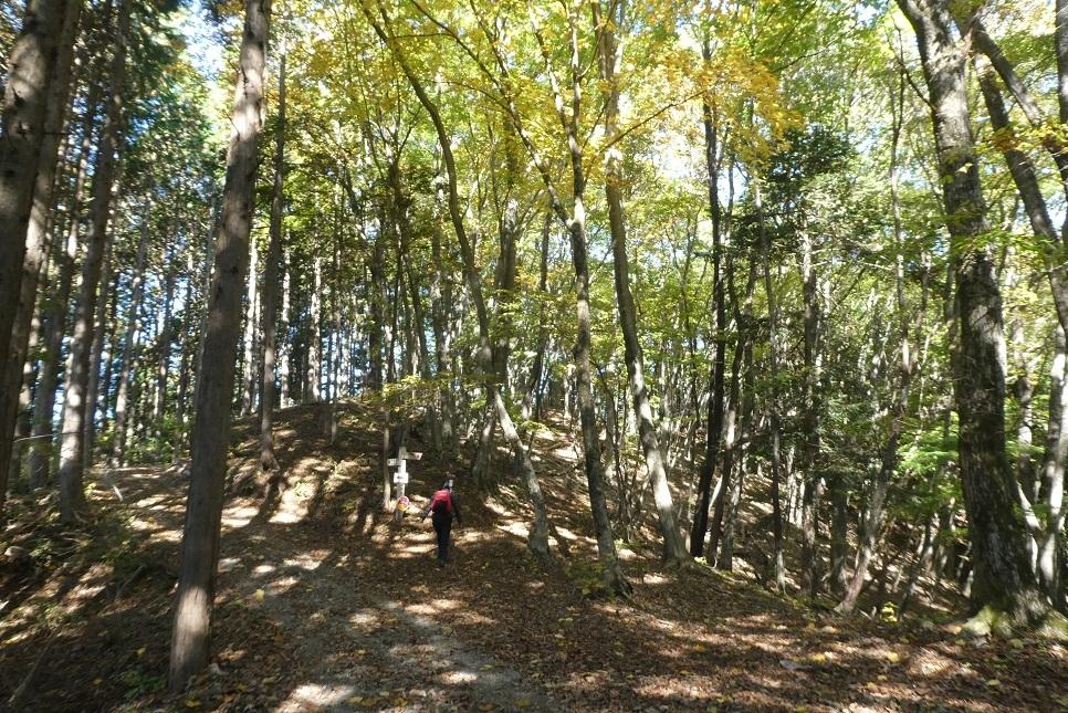 10/29 三頭山 / 黄葉と巨樹に会ってきた ①_d0288144_18492477.jpg