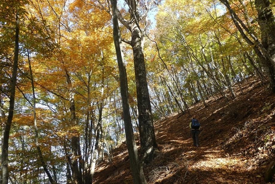 10/29 三頭山 / 黄葉と巨樹に会ってきた ①_d0288144_18512808.jpg