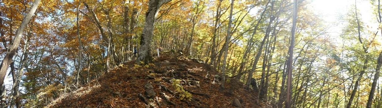 10/29 三頭山 / 黄葉と巨樹に会ってきた ①_d0288144_18532915.jpg