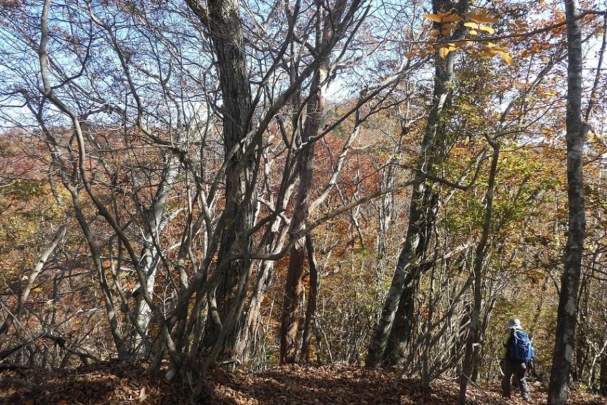 10/29 三頭山 / 黄葉と巨樹に会ってきた ①_d0288144_18535573.jpg