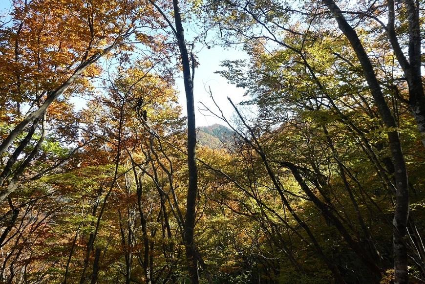 10/29 三頭山 / 黄葉と巨樹に会ってきた ①_d0288144_21513511.jpg