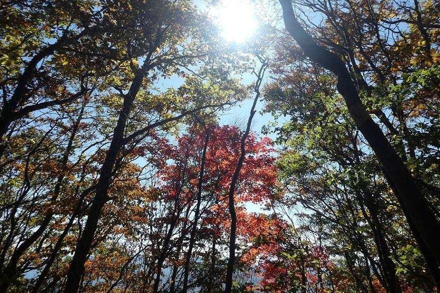 10/29 三頭山 / 黄葉と巨樹に会ってきた ①_d0288144_21530186.jpg