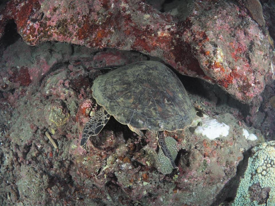 9/11 サンゴの産卵はありませんでした_a0010095_11475590.jpg