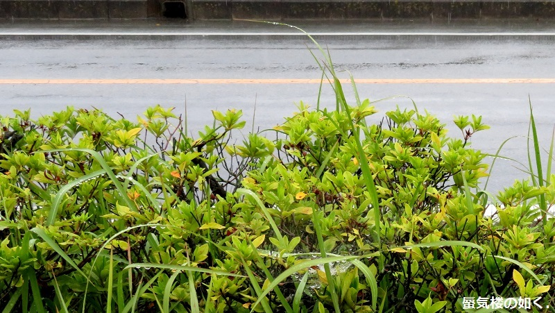 「神様になった日」舞台探訪002 第02話調べの日 山梨市中央線南側ほか_e0304702_05021778.jpg