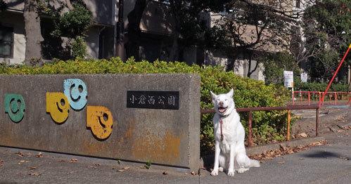 Vol.1525 小倉西公園_a0117039_19520749.jpg