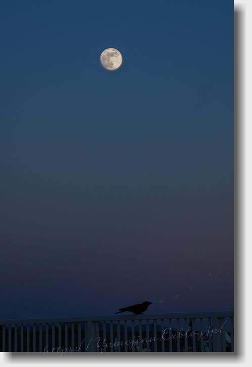 月夜に泣く烏_a0143439_19481144.jpg