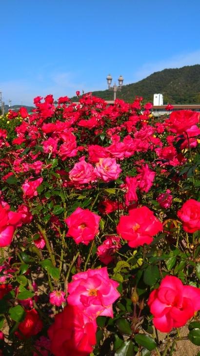 バラ祭り_c0175339_23465066.jpg