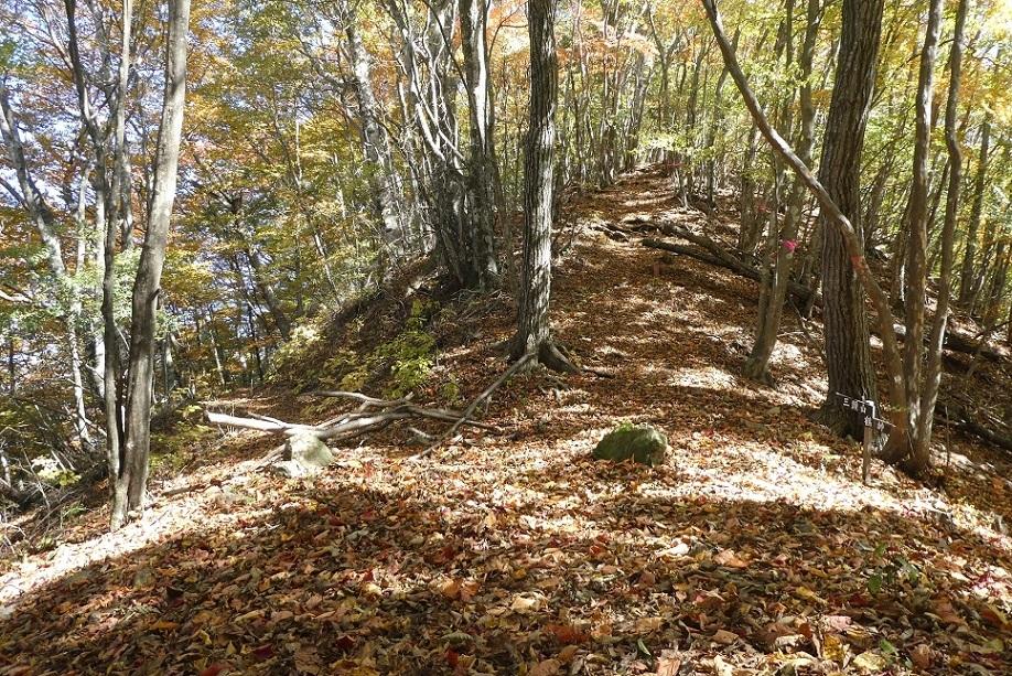 10/29 三頭山 / 黄葉と巨樹に会ってきた ①_d0288144_10161095.jpg