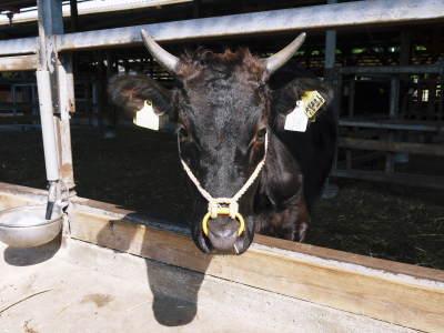 お歳暮にいかがですか!熊本県産黒毛和牛100%のハンバーグステーキを数量限定で予約販売中!_a0254656_17483241.jpg