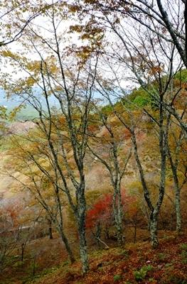 紅葉の吉野山を散策♪_b0194861_21092626.jpg