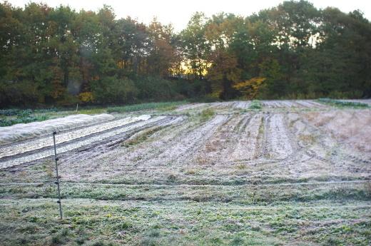 連日、まっしろに霜がおりています。_c0110869_06344952.jpg