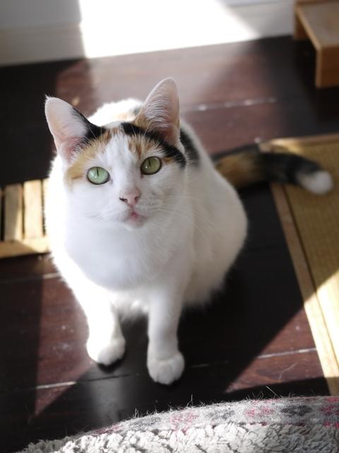 猫のお留守番 エンジェルちゃん編。_a0143140_22323929.jpg