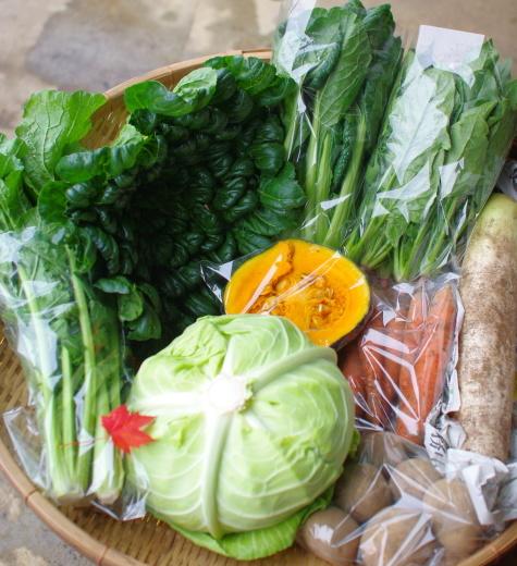 今週の野菜セット(11/3~11/7着)_c0110869_11562899.jpg