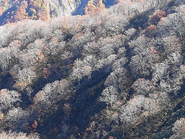 白山ド~んの大長山 SOTA#JA/IK-001_f0073587_20553446.jpg