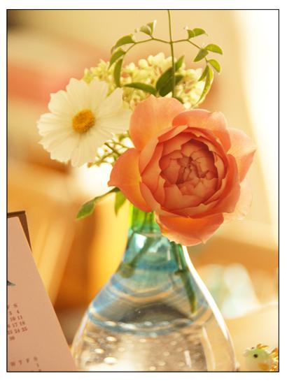1輪のバラ/ガラスの小鳥のお香立て/ミラ(♂)、お星さまになる_c0139591_08520322.jpg