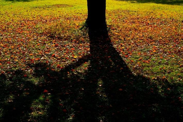 秋を感じるために樹林公園に行く_c0187503_17083265.jpg