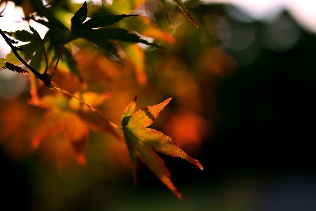 秋を感じるために樹林公園に行く_c0187503_17101529.jpg