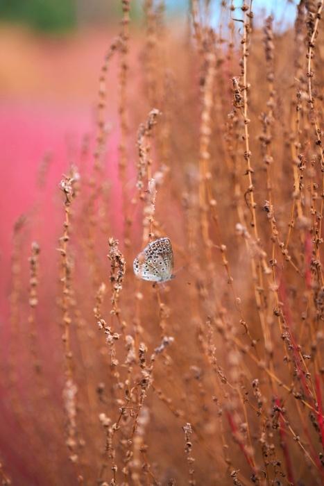 秋を感じるために樹林公園に行く_c0187503_17192996.jpg