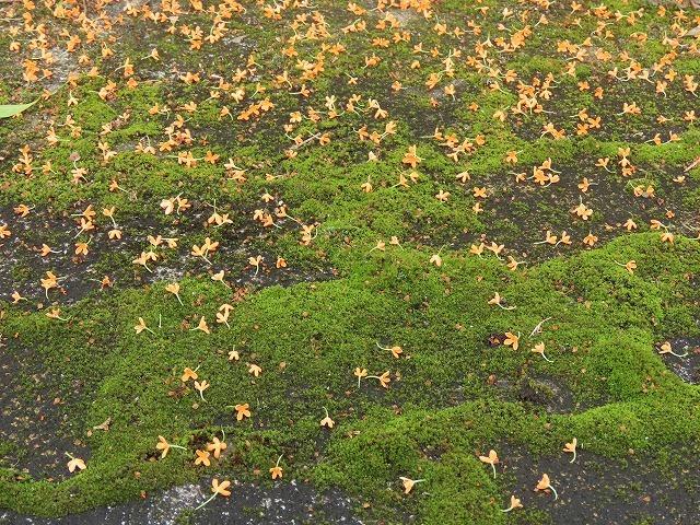 散歩で出会った花々(撮影:10月22日)_e0321325_18590057.jpg