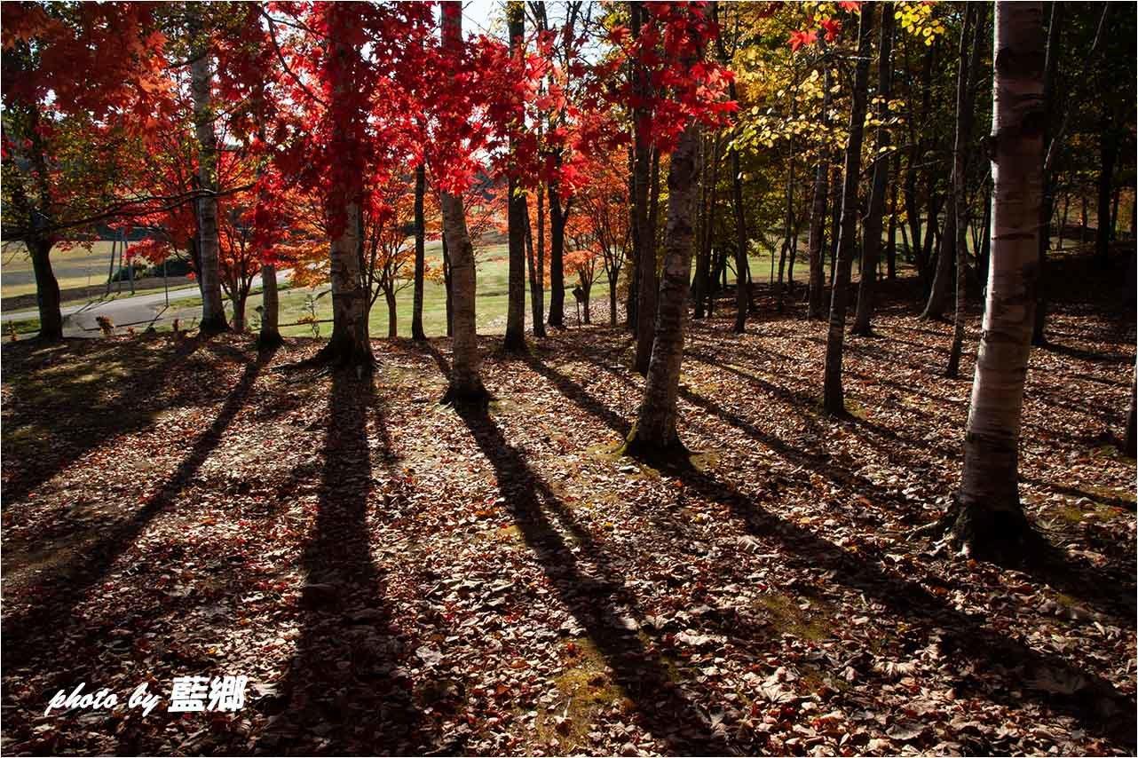 「束の間の紅葉」_a0245331_08405381.jpg