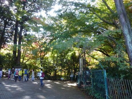 瑞宝寺公園~魚屋道~油コブシ_c0218841_20315984.jpg