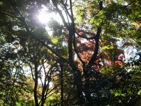 瑞宝寺公園~魚屋道~油コブシ_c0218841_20325278.jpg