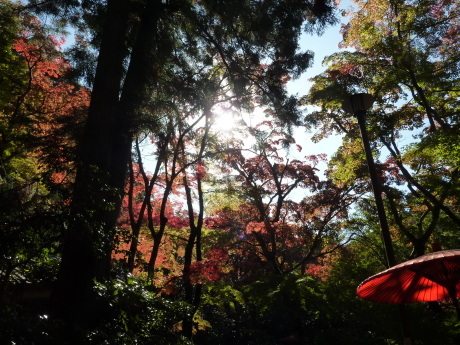 瑞宝寺公園~魚屋道~油コブシ_c0218841_20341694.jpg