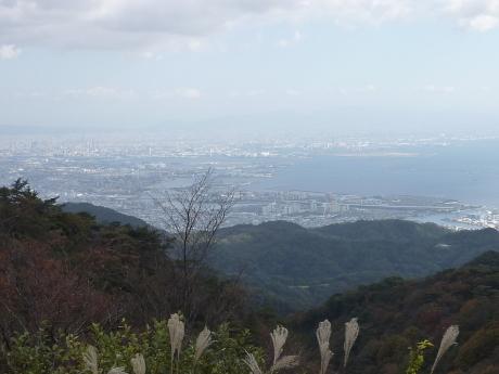 瑞宝寺公園~魚屋道~油コブシ_c0218841_20453201.jpg