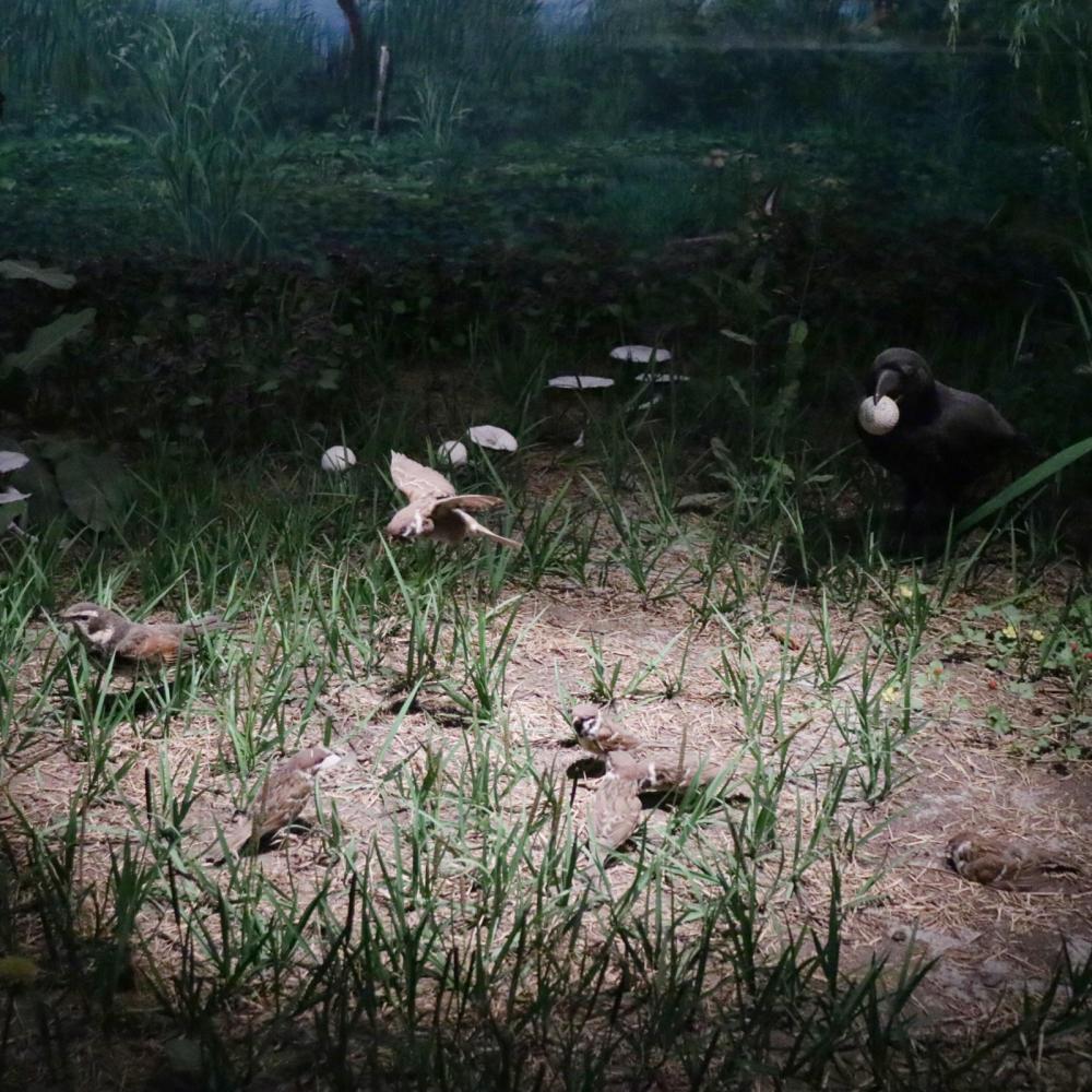 はじめての北区飛鳥山博物館_c0060143_20113665.jpg