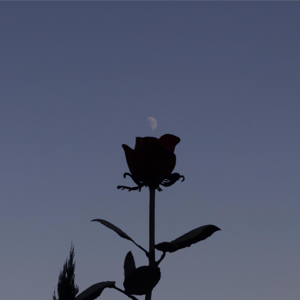 バラと月、オールドレンズで_c0060143_20335443.jpg