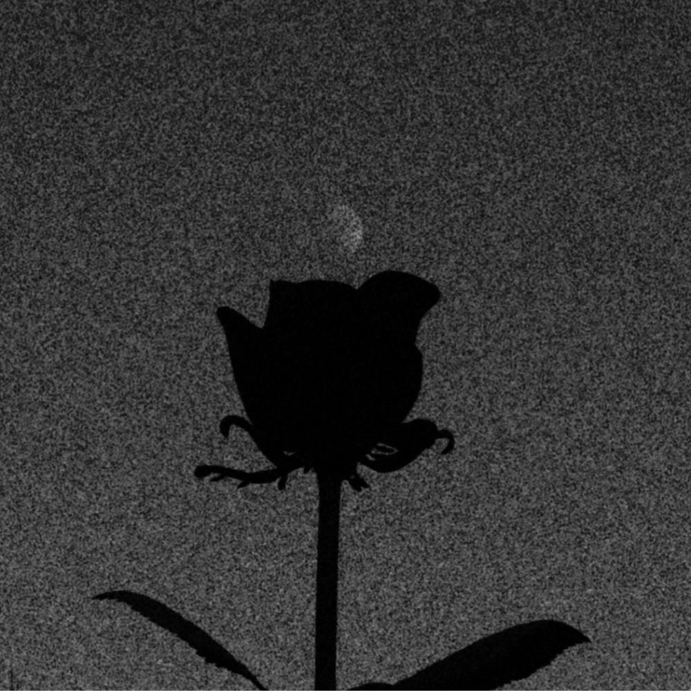 バラと月、オールドレンズで_c0060143_20340953.jpg
