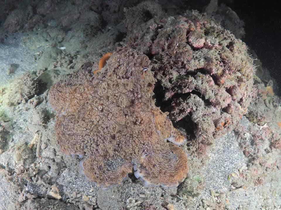 8/13 サンゴの産卵はありませんでした_a0010095_20493717.jpg