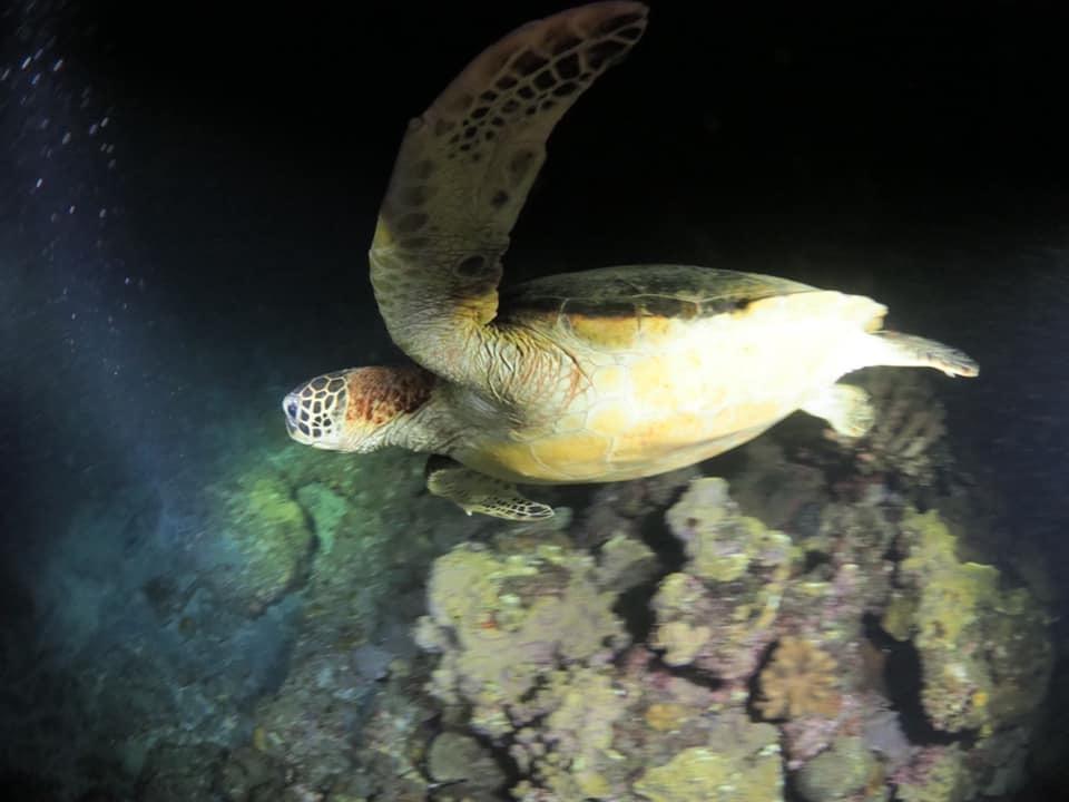 8/13 サンゴの産卵はありませんでした_a0010095_20493749.jpg