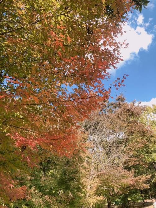 さんま御殿と秋の空_e0319202_09395603.jpg