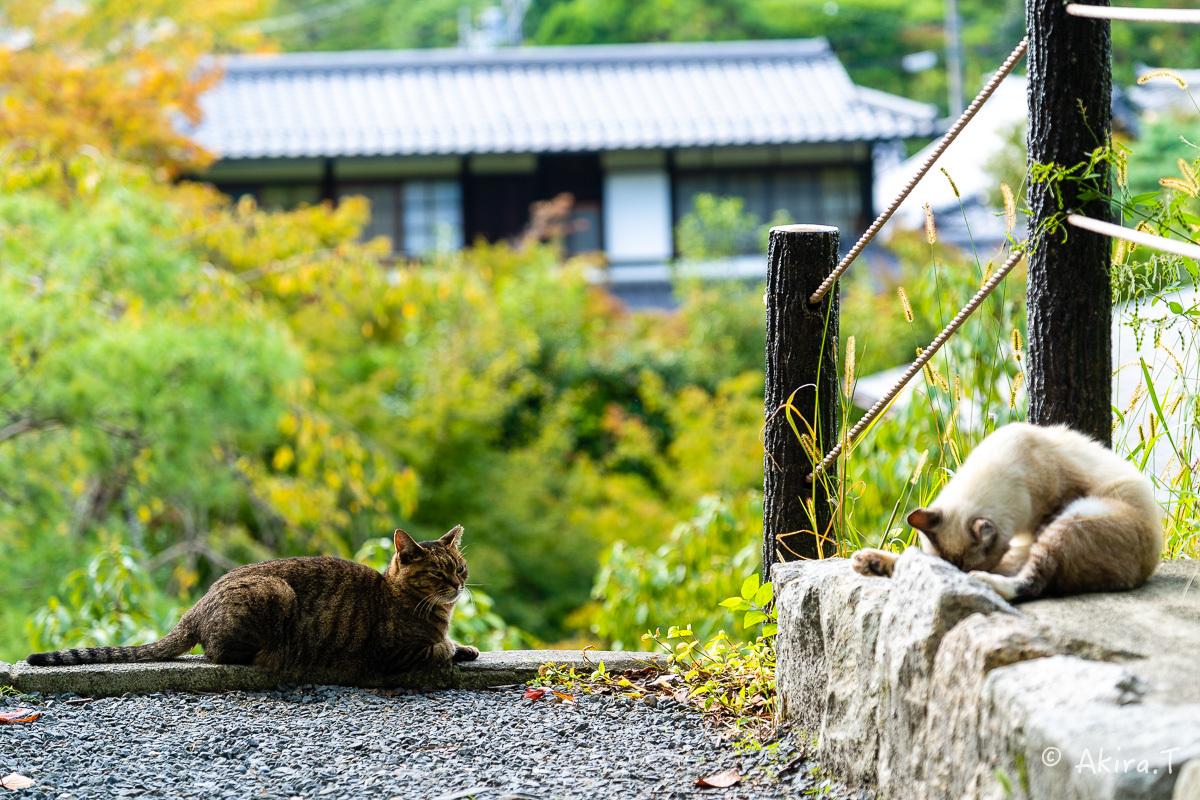 〜岩合光昭に挑戦〜 京都ネコ歩き -25-_f0152550_22333745.jpg