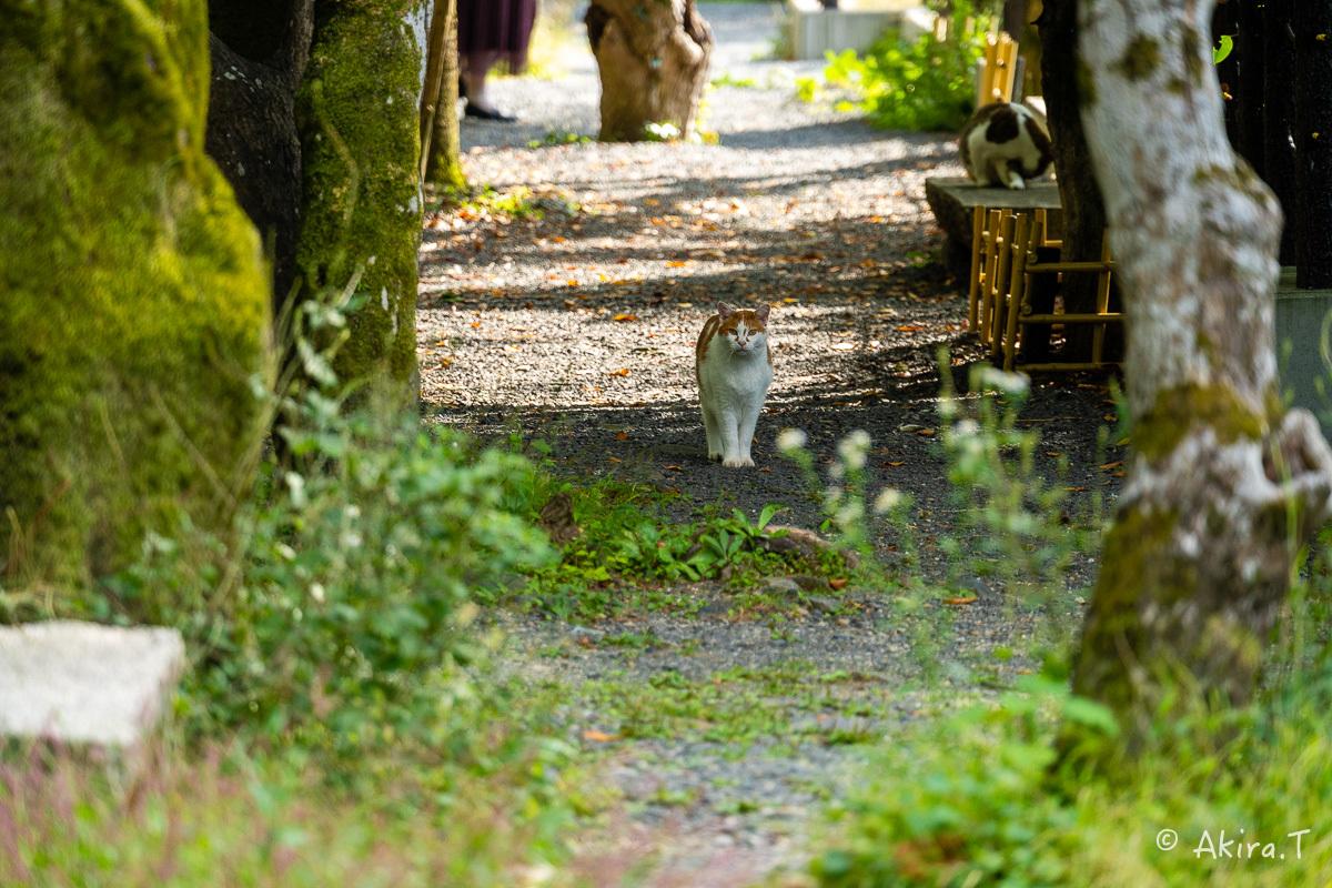 〜岩合光昭に挑戦〜 京都ネコ歩き -25-_f0152550_22361352.jpg