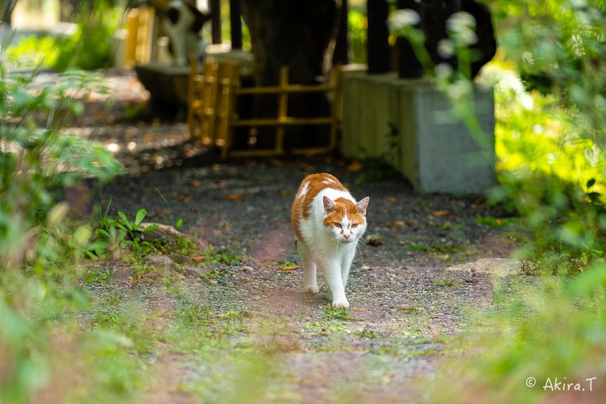 〜岩合光昭に挑戦〜 京都ネコ歩き -25-_f0152550_22362447.jpg