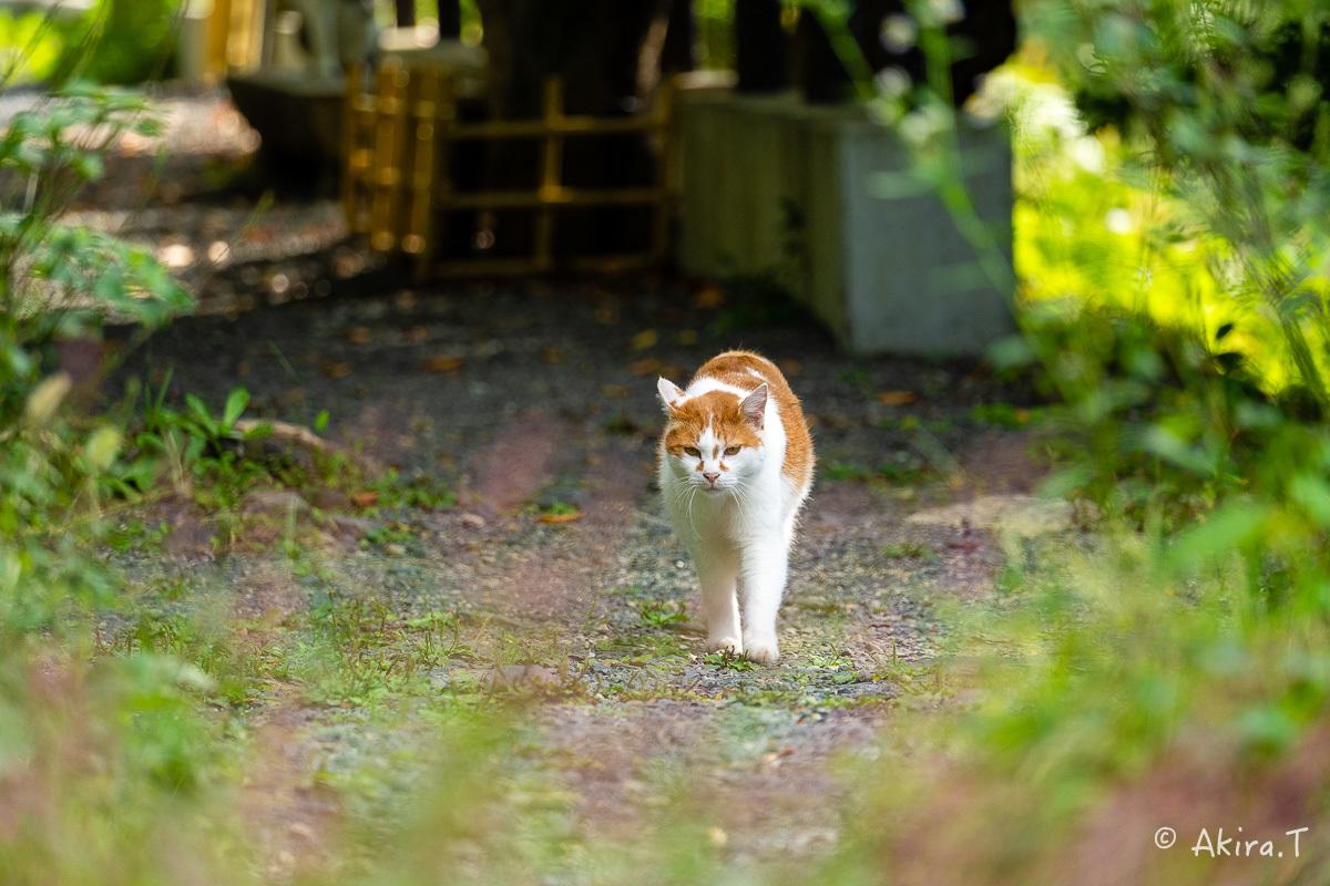 〜岩合光昭に挑戦〜 京都ネコ歩き -25-_f0152550_22363321.jpg