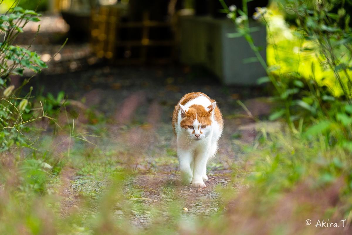 〜岩合光昭に挑戦〜 京都ネコ歩き -25-_f0152550_22364104.jpg