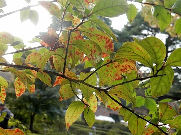 神代植物公園 1_d0075453_09350800.jpg