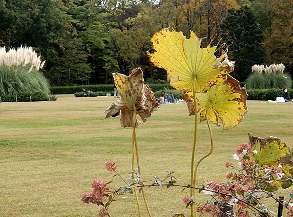 神代植物公園 1_d0075453_09384603.jpg