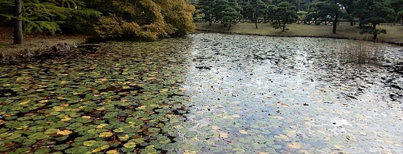 神代植物公園 1_d0075453_09403649.jpg