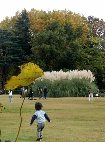 神代植物公園 1_d0075453_09414842.jpg