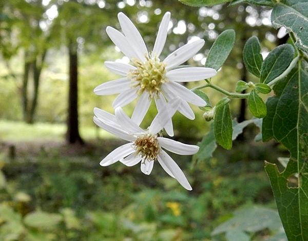 神代植物公園 1_d0075453_09542042.jpg